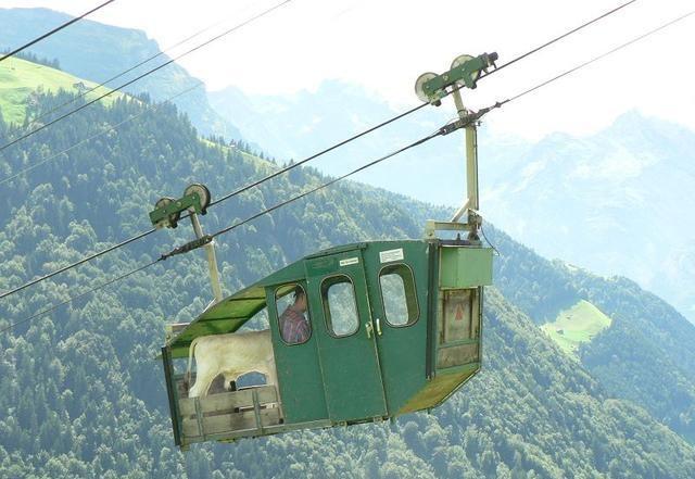 Luftseilbahn, wird auch zum Transport von Kälbern verwendet